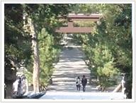 松の参道を歩き本殿へ